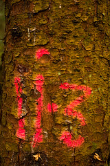 woodland grafitti (grahamrobb888) Tags: birnamwood autumn colours d800 nikkor50mmf18 perthshire scotland forest