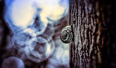 A Snail's Dream... (Silke Klimesch) Tags: bokeh schneckenhaus baum traum snail tree dream coquille rve arbre chiocciola sogno albero snailshell caracol sueo rbol sonho rvore marzenie limak   surreal psychedelic olympus omd em5