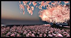 2016-13-9--11-08-52tempura (auwawa999) Tags: auwawa art awesome beautiful decorative dekoration evening glamour island johnbirdy travel tempura stunning life licht sl secondlife schn schatten landscape lagoon location landschaften