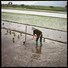 hoe wake wading (beetabonk) Tags: cndahb80160ns1406033 china yunnan hasselblad500cm carlzeisstplanar2880cf square 120 6x6 mediumformat dali