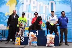 4ta Perrorunning (Via Ciudad del Deporte) Tags: 4ta perrorunning ven correr con tu mascota via ciudad del deporte 2016