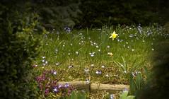 Day 67 - Hidden Garden (rumimume) Tags: ontario canada flower canon garden photo still day sigma calm niagara sring solotude 550d t2i picof rumimume