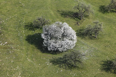 Cherry Blossom (Aerial Photography) Tags: trees by la spring meadow wiese aerial hayfield grassland bume cherrytree fruittree frhling luftbild treeblossom naturschutzgebiet landshut baumblte luftaufnahme obstbaum kirschbaum nsg truppenbungsplatz ndb kulturlandschaft streuobstwiese fotoklausleidorfwwwleidorfde 23042010 1ds42220 nsgtruppenbungsplatzlandshut