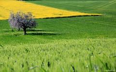 spring harmony  -  On explore # 43 (claudiophoto) Tags: landscape natura hills paesaggi marche colline macerata italynature paesaggidellemarche blinkagain bestofblinkwinners fotodellemarche