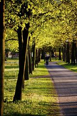 * (Johan Gustavsson) Tags: trees light sunset green gteborg spring sundown sweden gothenburg sverige trd vr ljus grnt alln johangustavsson