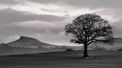 Solitary tree overlooked . (paul downing) Tags: winter canon greatayton pdp roseberrytopping pd1001 sx10is pauldowning