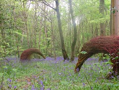 'Grazing' 2012 (Mark and Rebecca Ford Art Sculpture) Tags: uk flowers sculpture green bird art love festival bluebells architecture river landscape photography countryside photo pod gallery nest westsussex surrealism wildlife environmental screen structure tendril climbing growth galleries willow gourd hazel installation badger land surrealist form dogwood woven climber festivities weaving foundobject weave grazing landart ambiguous feathered testicle ecoart wovenwillow lavant greenart aarvark apendage plantform countrycrafts wovenart housenature southdownsnationalpark wovensculpture oraginicform twocirclesdesign arterialcytoplast may2012aardvarkbirdbadgerbluebellshoot riverhopeproject