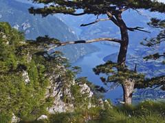 Radiša Živković - Border II (Radisa Zivkovic) Tags: blue mountain lake tree nature river landscape scenery europe tara serbia canyon srbija drina banjskastena