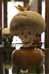 photoset: Naturhistorisches Museum: Daniel Spoerri - Ein inkompetenter Dialog? (23.5.-17.9.2012)