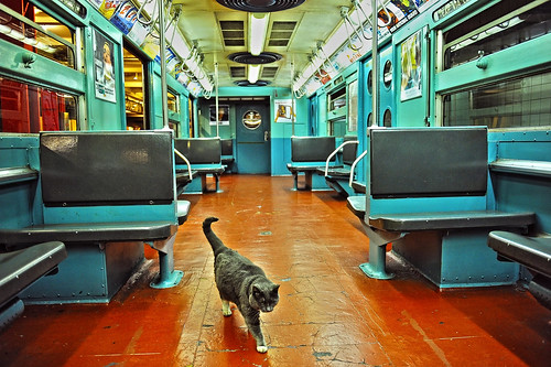 Cat and Train.