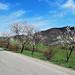 A08 Comaschi Claudia Via per Rosara
