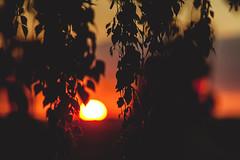 Sunset #180/366 (A. Aleksandraviius) Tags: sunset sun macro tree ex nikon sigma apo ii 365 70200 f28 dg 70200mm project365 hsm 365days d700 180365 nikond700 3652012