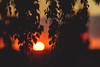Sunset #180/366 (A. Aleksandravičius) Tags: sunset sun macro tree ex nikon sigma apo ii 365 70200 f28 dg 70200mm project365 hsm 365days d700 180365 nikond700 3652012