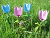 Happy Tulip Familie 2