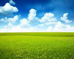 field of spring flowers and perfect sky (dang quang nam) Tags: blue wild summer sky cloud sun sunlight plant blur flower green nature beautiful beauty field grass yellow clouds rural garden landscape spring flora buttercup blossom farm country meadow sunny nobody dandelion land daisy agriculture plain idyllic russianfederation