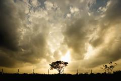Restricted Area (hari{z}ulkarnain) Tags: sunset bali tree nikon warm university angle wide engineering sigma wideangle malaysia heat lone monash tok kelantan matahari universiti naim darul sigma1020 d80 kelate umk bachok melawi nikond80 impressedbeauty terbenam