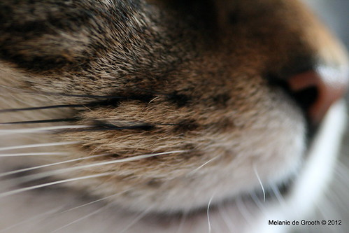 Tigger's Whiskers