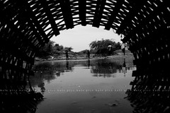 | Pond fishing (Kals Pics) Tags: life light shadow sky people blackandwhite bw food india fish art nature water monochrome clouds landscape photography living daylight blackwhite fishing pond village basket pov perspective culture lifestyle pointofview tradition colorless lightandshadow villagepeople fishingnet villagelife nonvegetarian ruralindia lightandlife indianlife incredibleindia thiruvallur thirumazhisai peopleofindia tiruvallur ruralpeople kalspics pondfood mettuthangal pondfishes