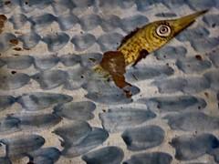 jour maigre (3) (canecrabe) Tags: majolique cramique poisson faence pavement muse cloitre santachiara sainteclaire clarisse naples