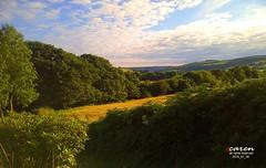 Walk in the Evening Sun (caren (Thanks for 1 Million+ views)) Tags: evening barley wales eveningsun walk landscape cymru ceredigion