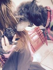 Pure innocence / pura inocencia #puppy #love #animals #pets #Ecuador #Photo #Fotos #mascotas #dogs (Corahp11) Tags: puppy love animals pets ecuador photo fotos mascotas dogs