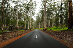 Road To Nowhere (Macr1) Tags: 61403327236 australia bush camera cloudy conditions d700 default eucalypt filters forest geography gumtrees highway jarrah lens location markmcintosh nikon nikond700 outdoor overcast pcenikkor24mmf35ded rain road wa westernaustralia macr237gmailcom markmcintosh