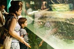 Acuario Agosto 2016 (09) (Fernando Soguero) Tags: acuario zaragoza acuariodezaragoza aragn turismo aquarium nikon d5000 fsoguero fernandosoguero