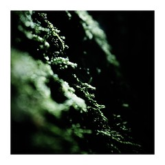 snaketripping (seba0815) Tags: ricohgrdiv grdiv nature green outdoor wood moss abstract natur black dark shadow light daylight water wet drops bokeh square framed macro mood walk forest seba0815