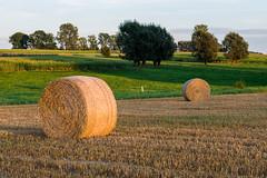 Gloeiend Pajottenland (P_Hibon) Tags: herne leenstraat avond pajottenland stro belgium belgie strobalen strawbales zonsondergang sunset