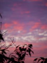 Sunset 20160829 (caligula1995) Tags: 2016 balconygarden clouds plumtree sunset