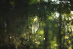 In the air (Tammy Schild) Tags: helios tree branch green summer web spiderweb light bokeh morning forest