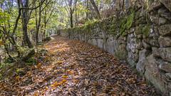 Follow the path (GC - Photography) Tags: parque natural park bosque forest orense galicia españa spain nature naturaleza hojas leaves gcphotography