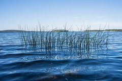 Natur (Joakim stberg) Tags: ff fullframe jrflla stockholm jakobsberg mlaren fs160911 natur fotosondag vatten water lake islands pentax