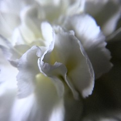 Flower macro (Ian Press Photography) Tags: clip macro lens flower flowers petal petals clipon plant plants flora