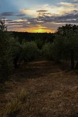 Tramonto (baldifiorella) Tags: tramonto collina olivi tuscany nature