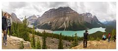 Canada - Banff National park (Gran Hglund (Kartlsarn)) Tags: canada banff banffnationalpark bowsummit nationalpark lakepeyto peyto 2016 granhglund kartlsarn kartlasarn d800 nikon rosabussarna rosa bussarna pinkcaravan greentortoise