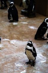 penguin stand still (Yusuke OYAMA) Tags: ikebukuro