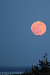 May 2012 ~ Super Moon ~ 18/52 (Trish P. - K1000 Gal) Tags: moon water michigan full grandtraversebay northport leelanaucounty milkmoon flowermoon supermoon buddingmoon assignment52182012