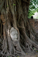 Roots (Patman69) Tags: temple fuji bangkok ayuthaya ruines x100 patman thaland fujix100