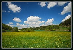 Dandelions in Germany (Paul Rosenhart) Tags: sky germany deutschland bavaria nikon wolken dandelion duitsland paardebloem beieren d80 altmuhltal paulrosenhart flickrstruereflection1 flickrstruereflection2 flickrstruereflection3 rememberthatmomentlevel1 rememberthatmomentlevel2