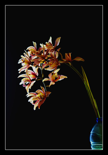 Orchid on black background.