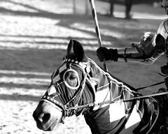 ARFJoust031012zzzw (MegzyTred) Tags: arizona horses horse leather festival spring boots feather hats handsome tights arf knights armor joust renaissance renfest jousting rennaisance arrogance helmets lances fakeblood crowns horsemanship casagrande chivalry azrenfest sirmax megzytred sirmaximillian march2012 hlat sirmaxmillian arf2012 azrenfest2012 theatricaljousting rennaissence