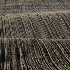 Field (Joerg Marx) Tags: field feld acker arableland
