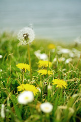 Drift Away (_mr_dave_) Tags: blue sea white plant flower green clock grass yellow weed dandelion daisy portsmouth flektogon seafront southsea carlzeiss sonynex5