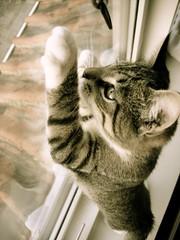 DSC05944.JPG (Davidshansen+) Tags: pet cute cat kat chat pussy gato katze   puss mis gatto figaro  huisdier pussycat haustier   kucing pusa    cattus animaldeestimao  missekat     conmo