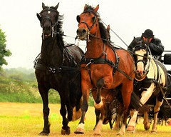 Galloping horses. (Edward Dullard Photography. Kilkenny, Ireland.) Tags: kilkenny ireland horses sports carriage action colorphotoaward flickrstruereflection1