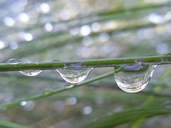 droplets (AleksandraMicic) Tags: green grass dewdrops images photographs aleksandramicic