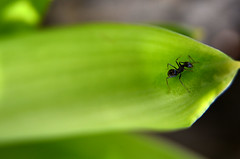 (Trsila Moscoso) Tags: macro planta textura natureza beleza cor colorido delicado suavidade