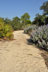 Pine Ridge Trail with Scrub Lupine