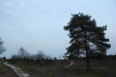 Fading Paths (Ali Black) Tags: new sky tree forest canon skies open path paths fading newforest 550d dibden purlieu